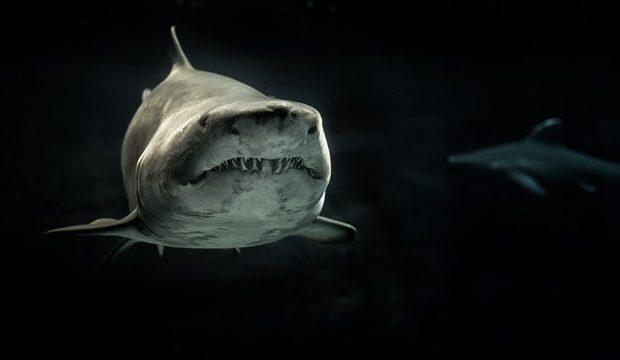 Why Do Sharks Attack Kayaks?